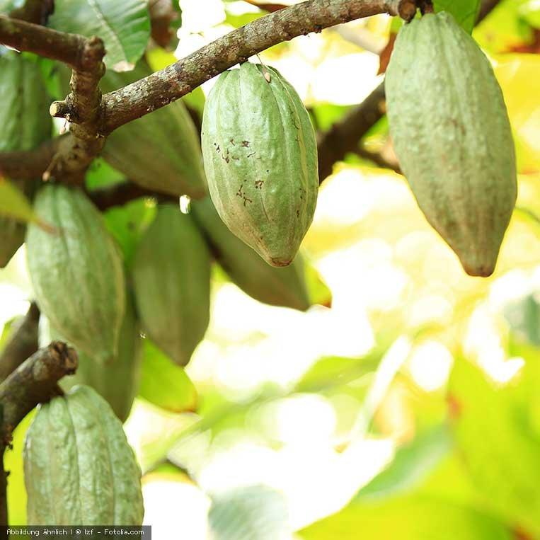 Enthäutete Kakaobohnen, bio 2.5 kg